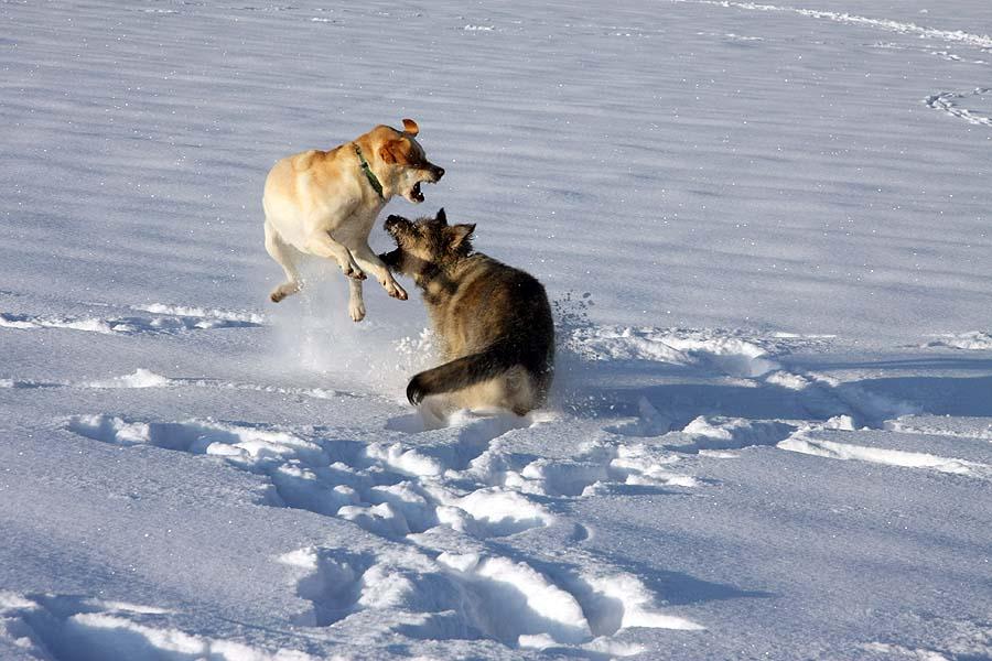 Hunde - Ballet Teil 2
