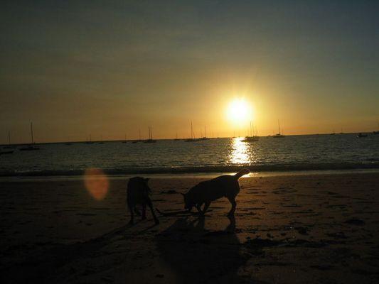 Hunde beim Sonnenuntergang