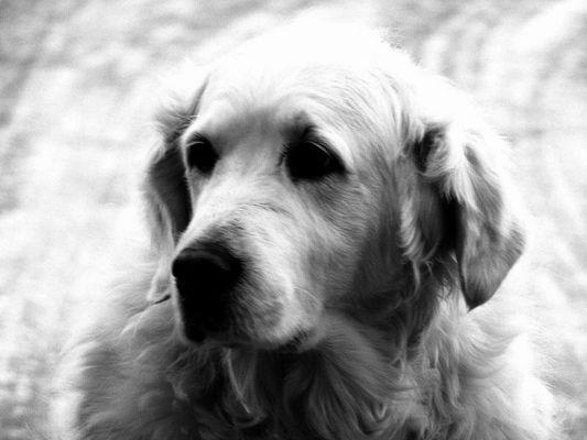 Hunde-Blick