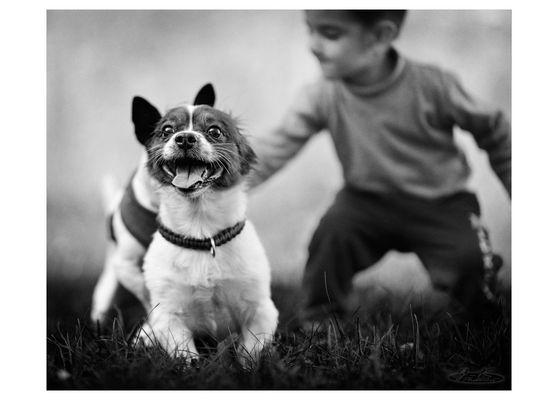 * Hunde, die poppen, beißen nicht *