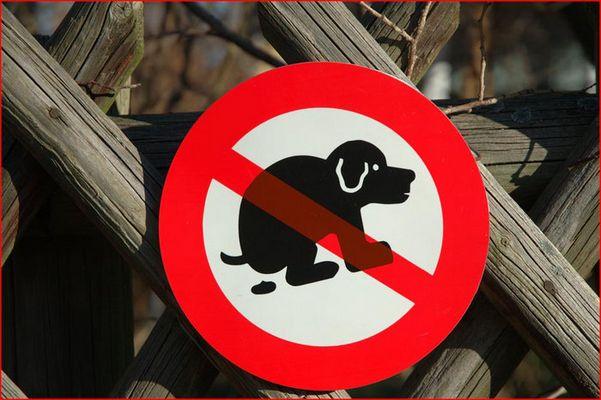 Hunde dürfen hier nicht...