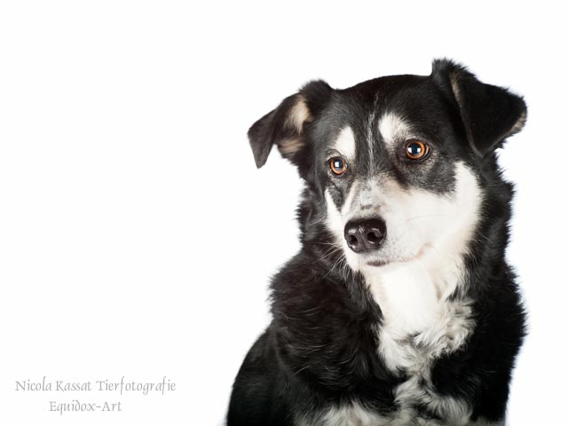Hunde-Fotoshooting Reitverein Rudow - Mascha -