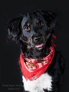 Hunde-Fotoshooting Reitverein Rudow - Stanley -