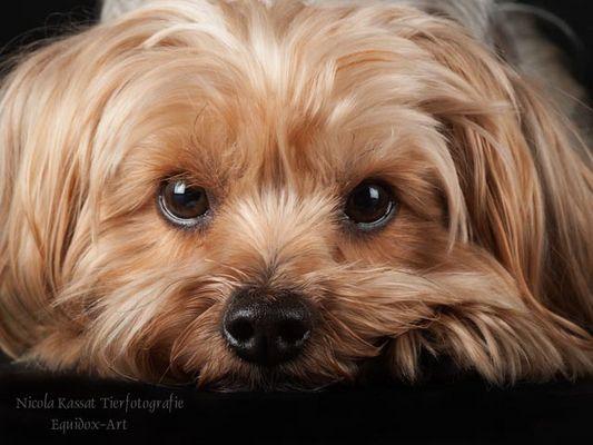 Hunde-Fotoshooting Reitverein Rudow - Timmi -