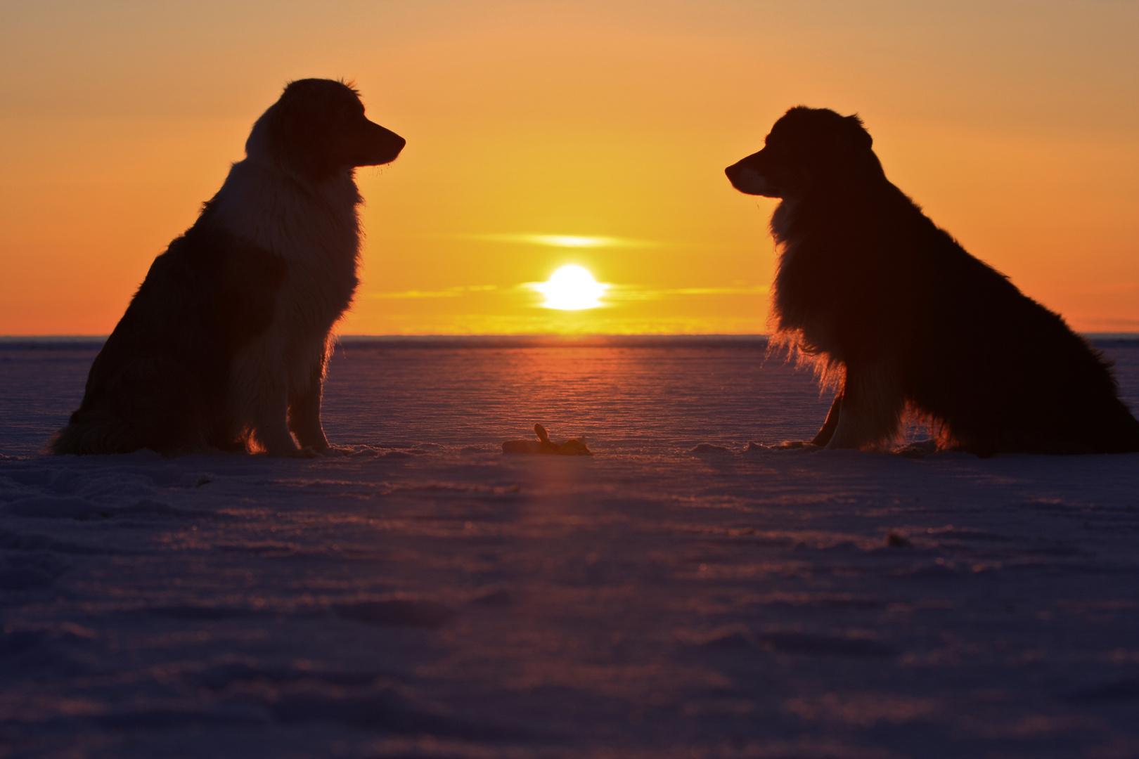 Hunde im Gegenlicht, Sonnenuntergang auf Römö 14.03.13