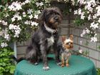 Hunde im Hof