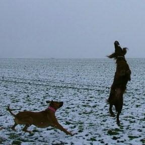 Hunde in Aktion