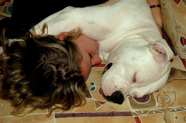 Hunde Liebe ll ...