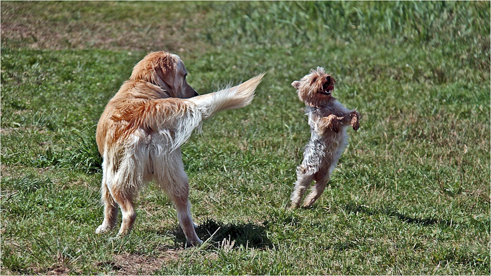 Hunde - Rock n Roll