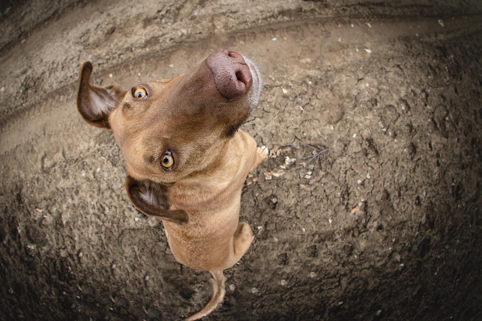 Hunde-Schnute