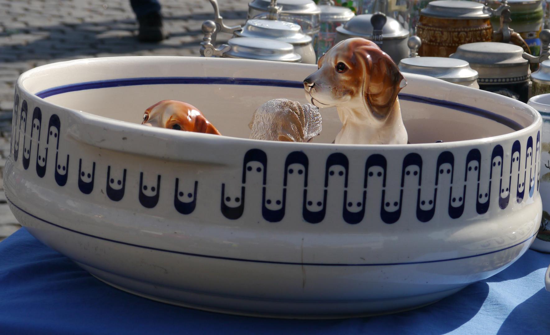 Hunde suchen ein neues Zuhause....
