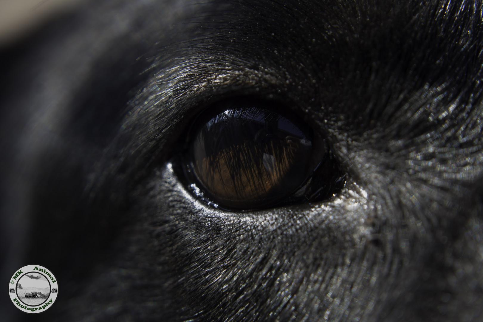 Hundeauge /Dogseye