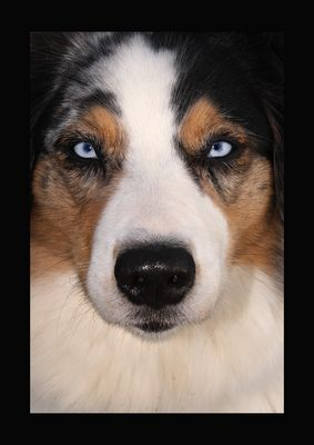"""Hunde""""augen""""blick"""