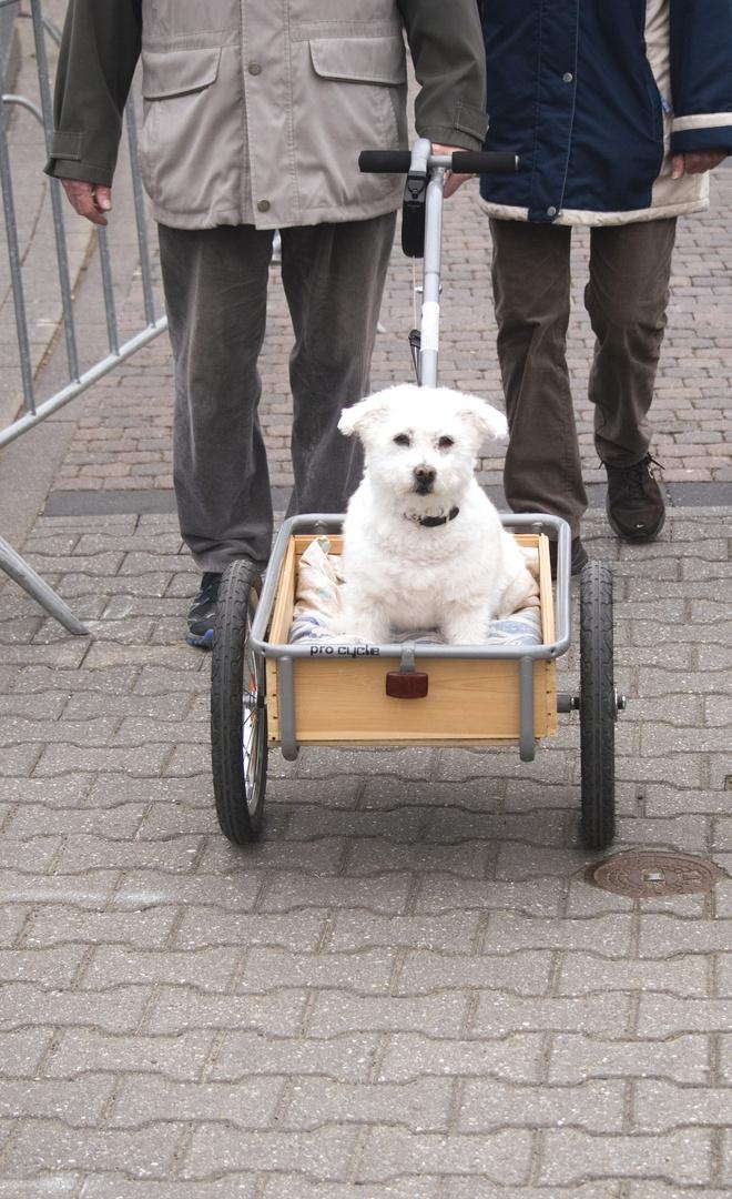 Hundeausgang im Frühling