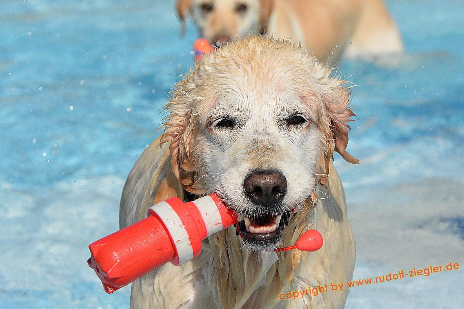 Hundebadetag im Kreuzsteinbad 2016