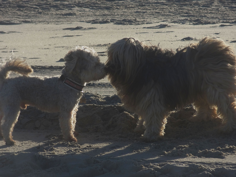 hundebussi am strand