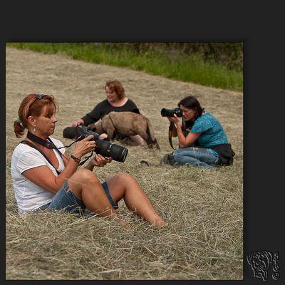 hundefotografen