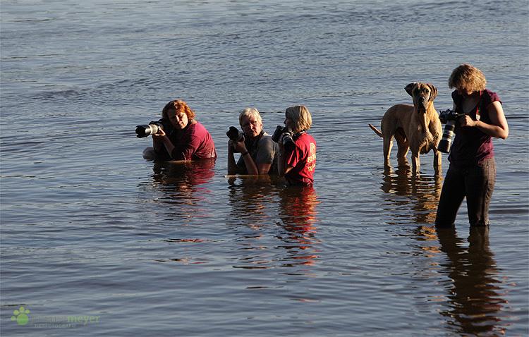 Hundefotografen haben doch echt ne Schacke