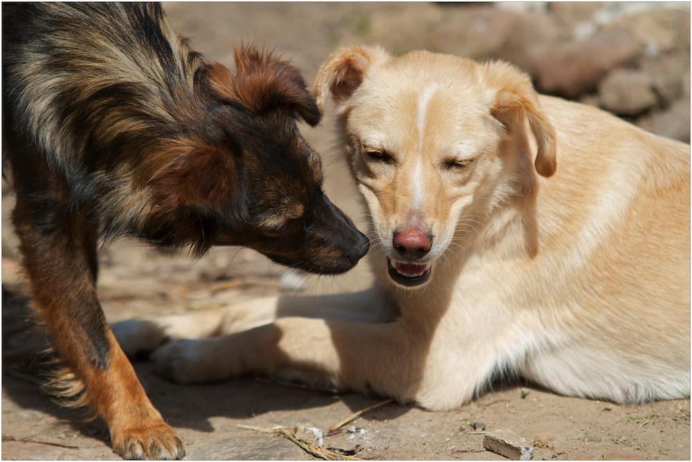 Hundefreundinnen