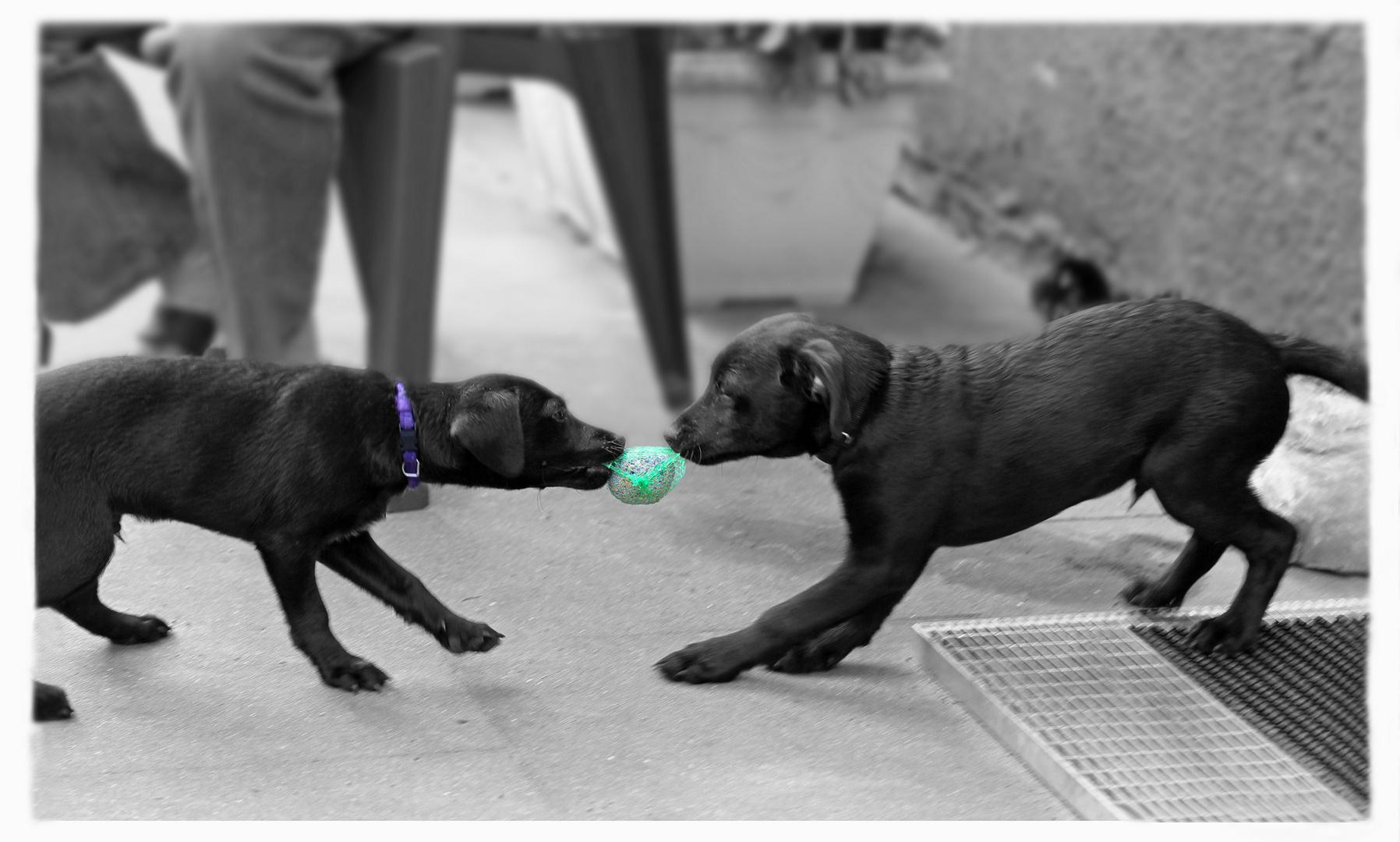 Hundefutter ?? :-))