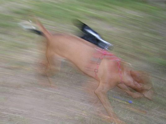Hundehatz