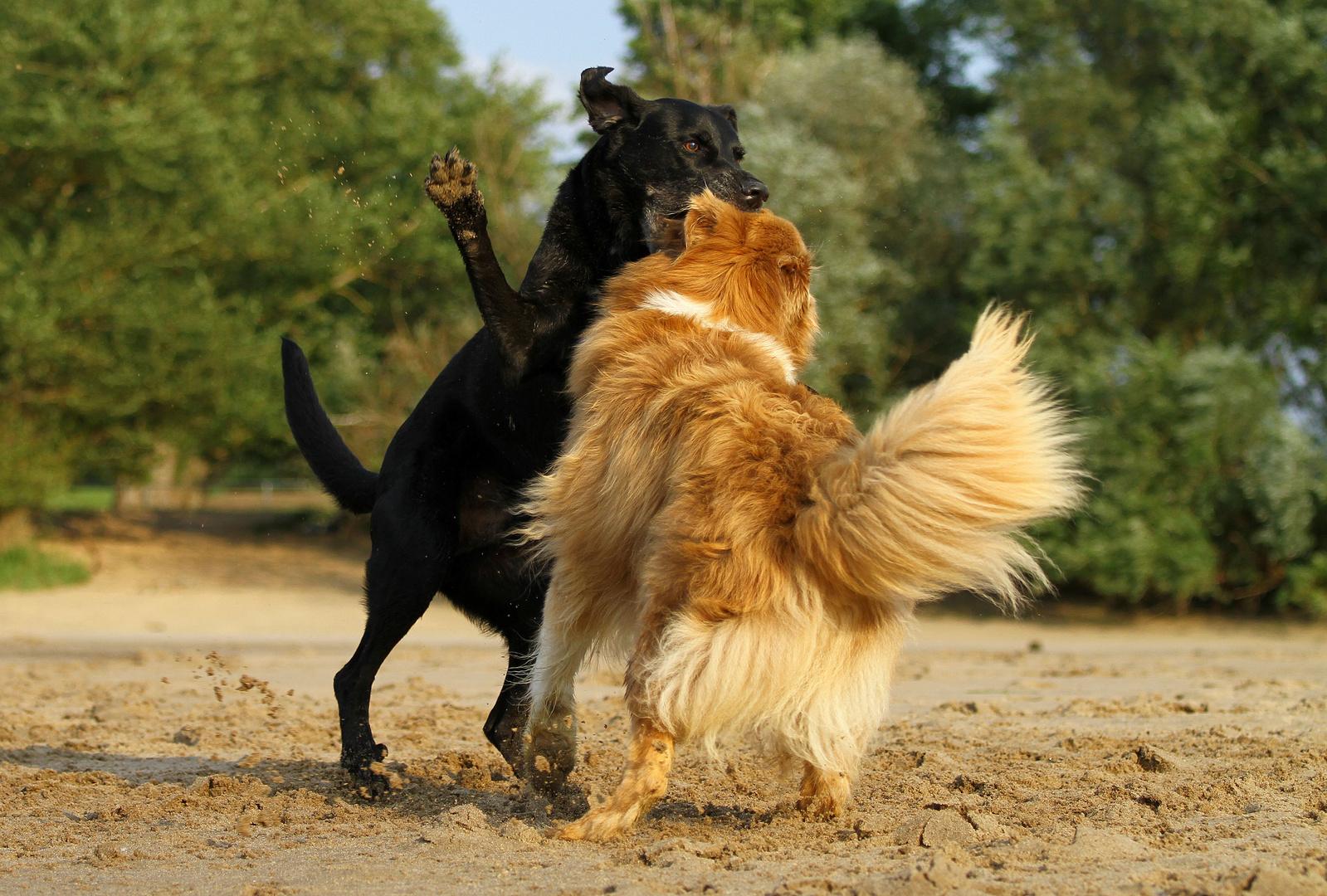 * Hundekampf  *