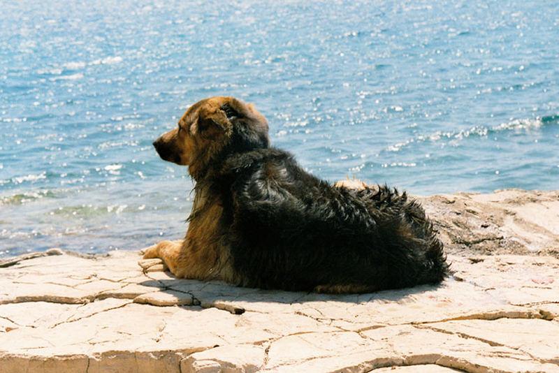 Hundeleben auf ner einsamen Insel