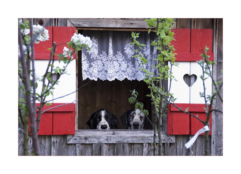 Hundeleben in der Alpenrepublik