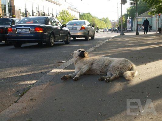 Hundeleben: Obdachlose Tiere haben in Russland ein schweres Los