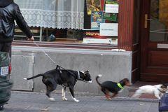 Hundeleinen können Leben retten