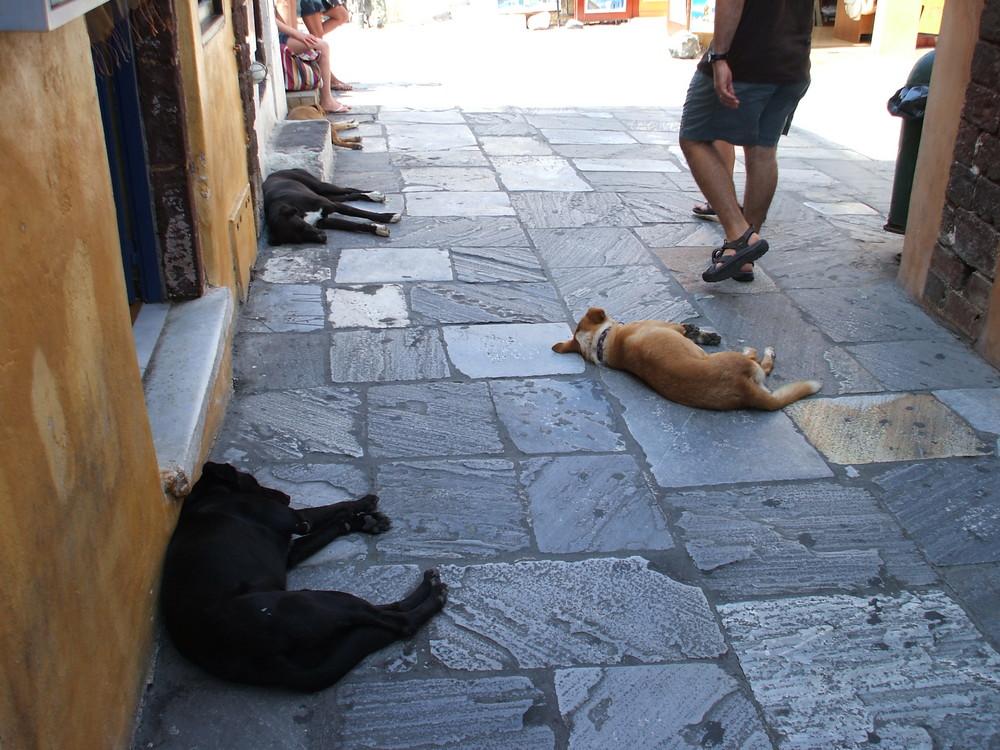 hundemüde auf Santorini
