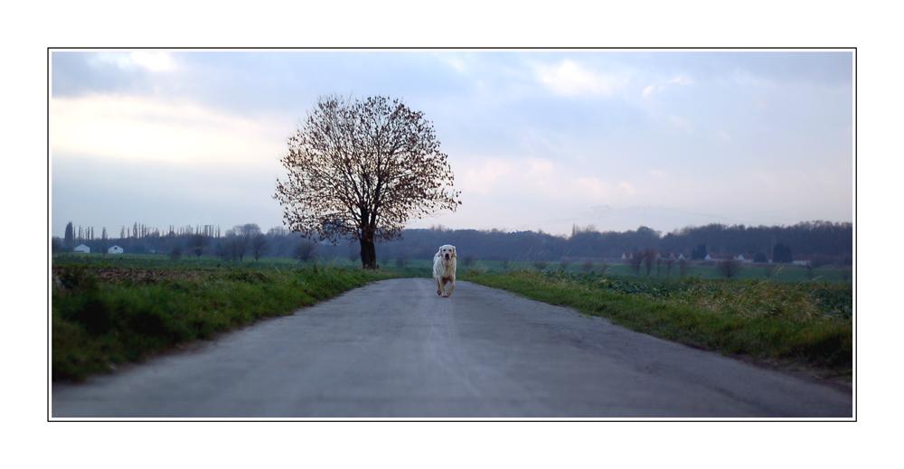Hundeperspektive