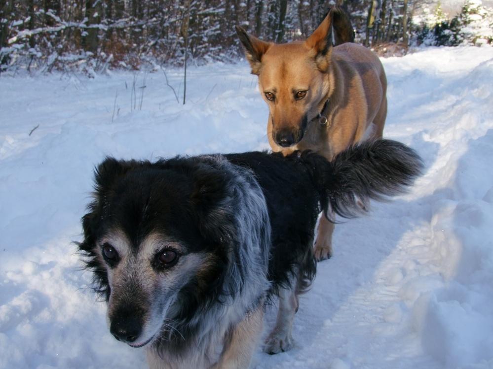 Hundeperspektive: Flöckchen und Josy