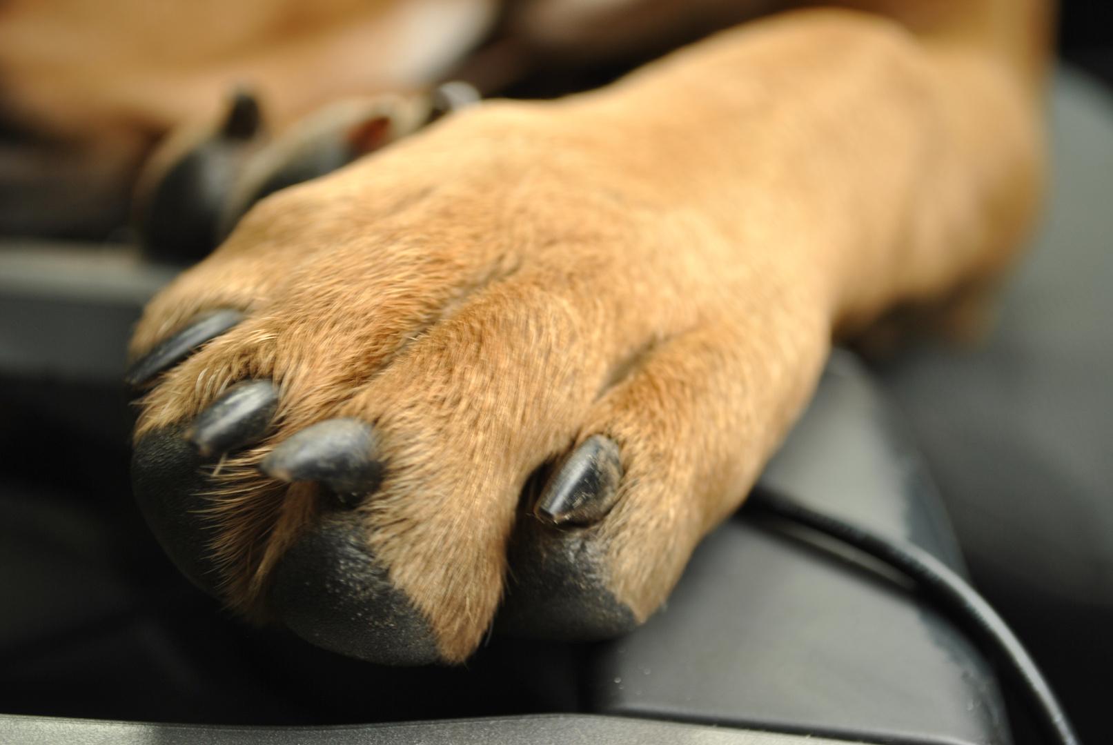 Hundepfote Bild