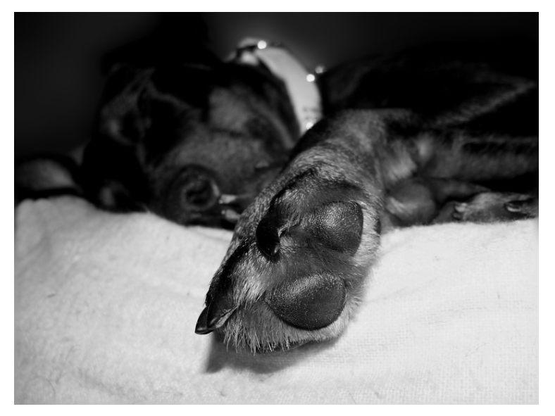 Hundepfotografie