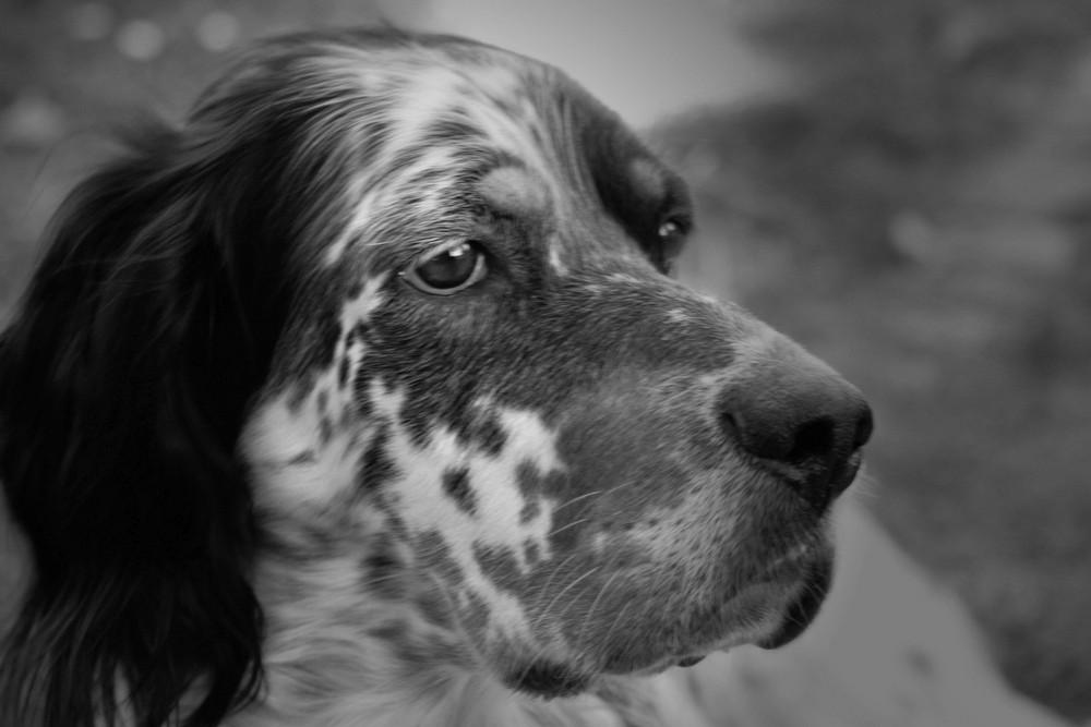 Hundeportrait...