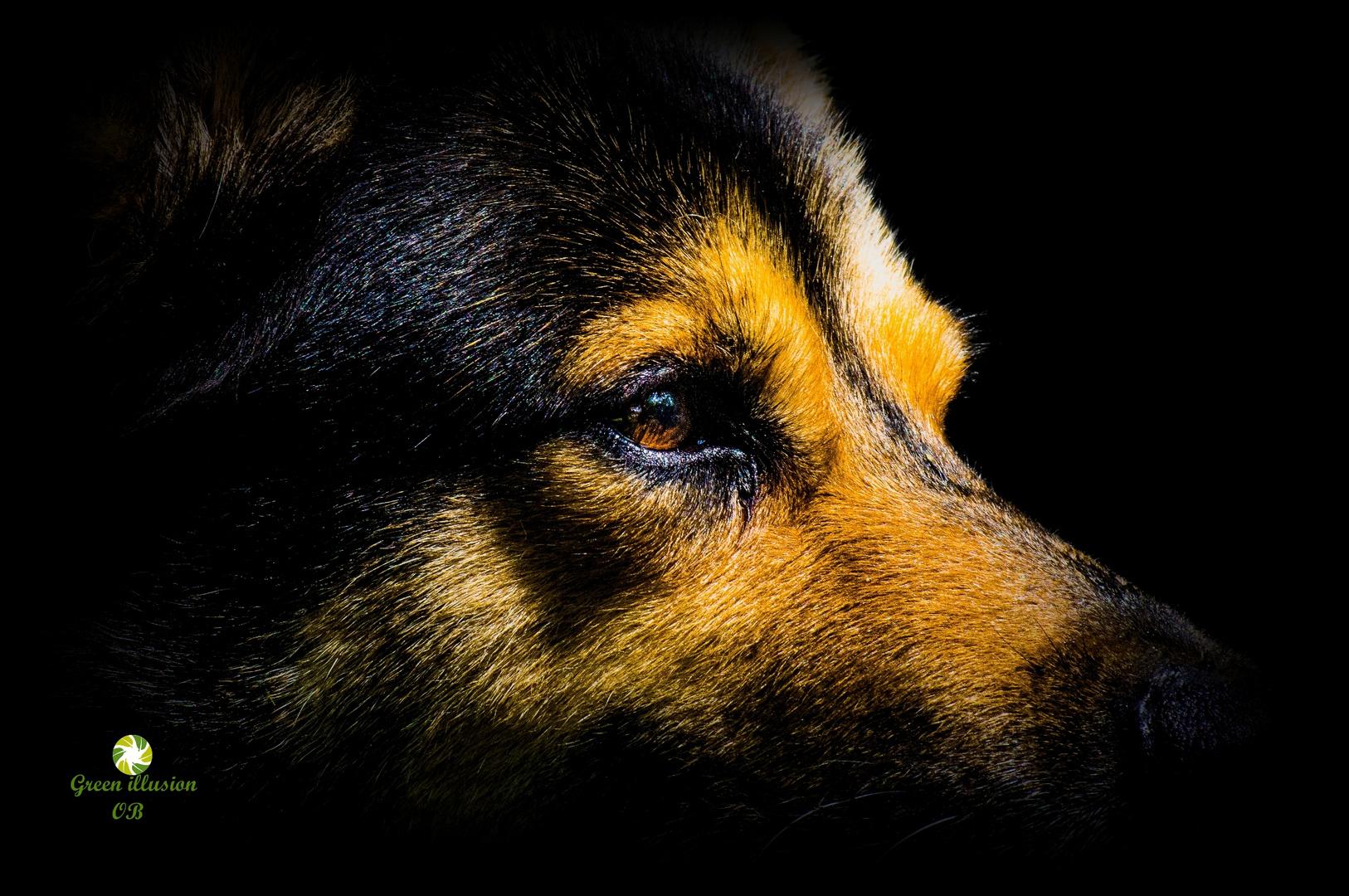Hundeportrait