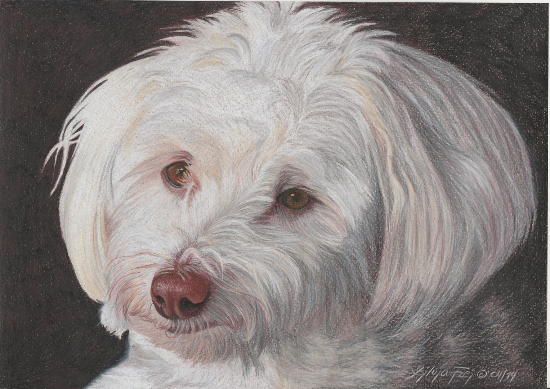 Hundeportrait - fertige Zeichnung