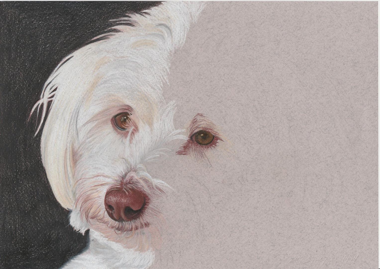 Hundeportrait - noch in Arbeit