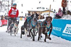 Hundeschlitten Rennen Todtmoos 2012 - 02
