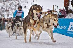 Hundeschlitten Rennen Todtmoos 2012 - 03