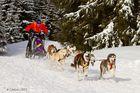 Hundeschlittenrennen 2012 - Bad Hindelang / Unterjoch (2)