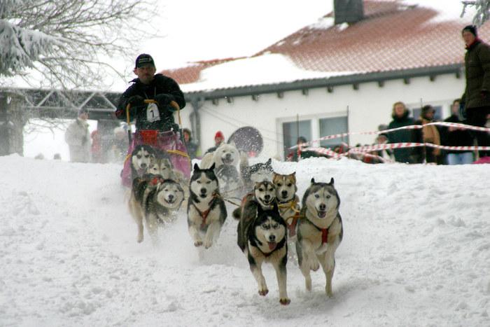 Hundeschlittenrennen Feldberg 12.03.05