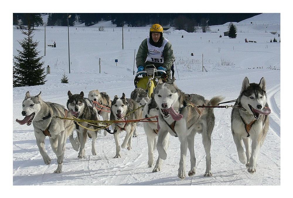 Hundeschlittenrennen im Tannheimer Tal
