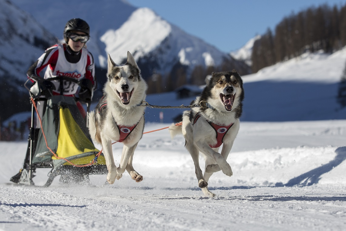Hundeschlittenrennen - Splügen
