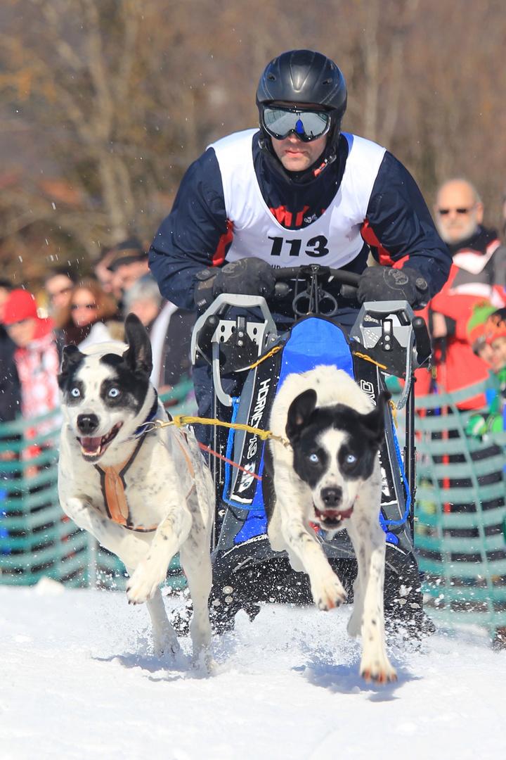Hundeschlittenrennen Wallgau