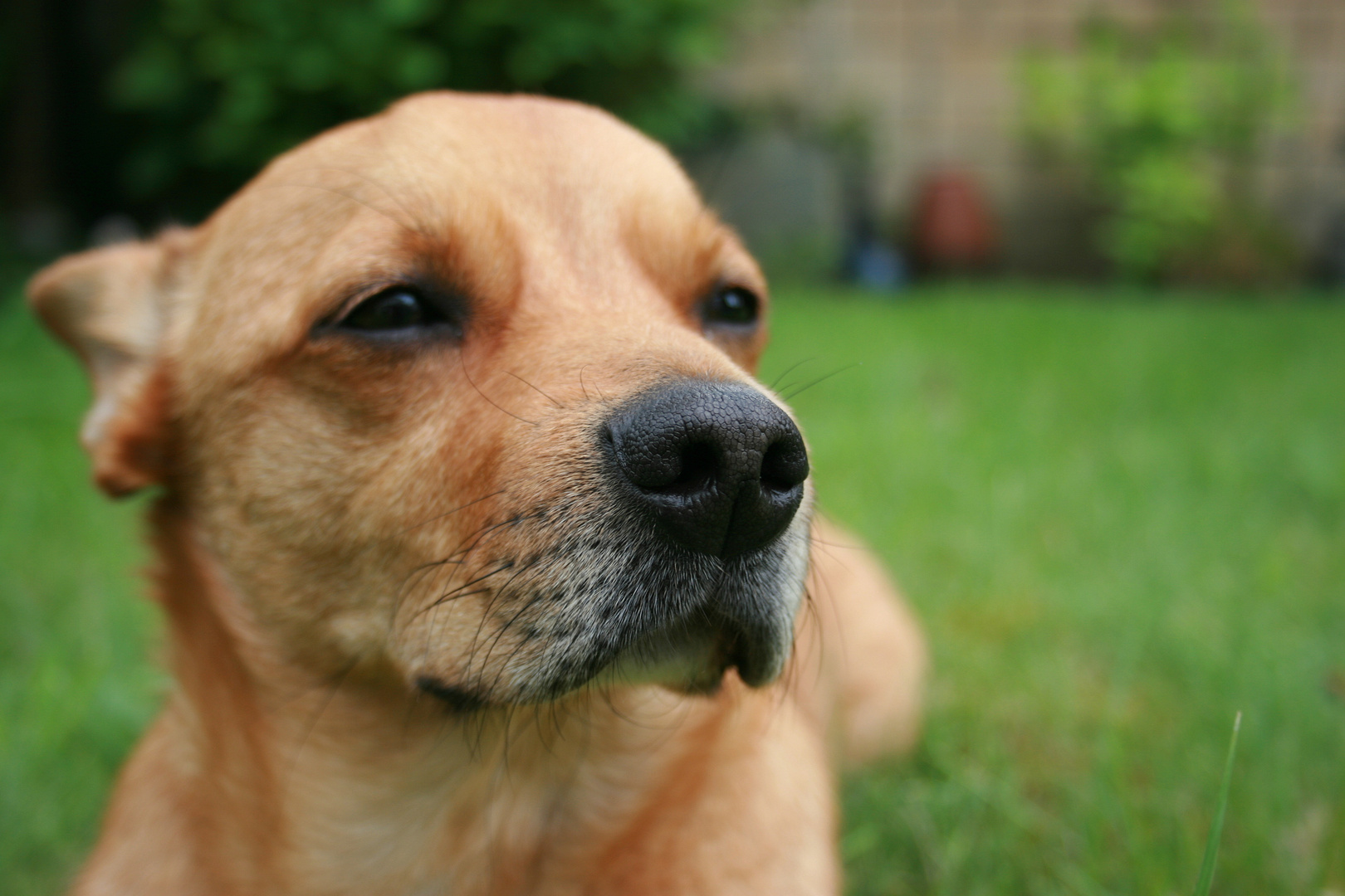 Hundeschnauze