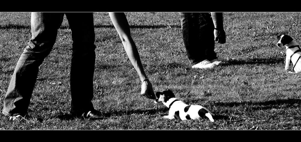 Hundeschule (2)