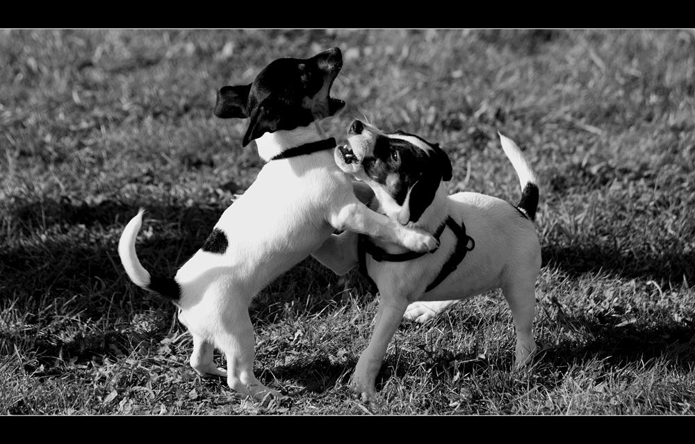 Hundeschule (3)