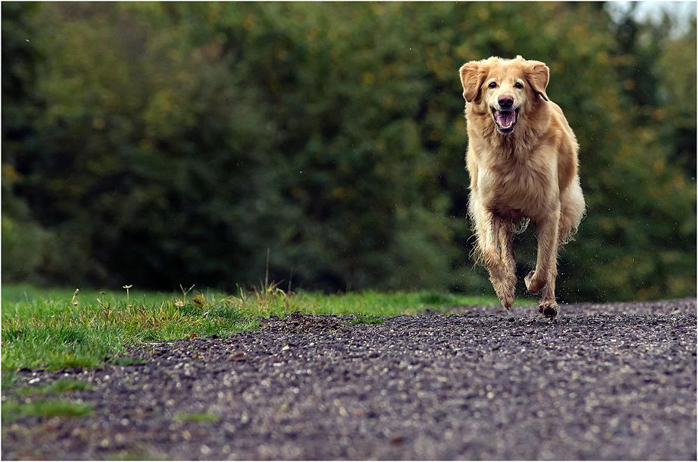 Hundeschule ? Fotoschule !